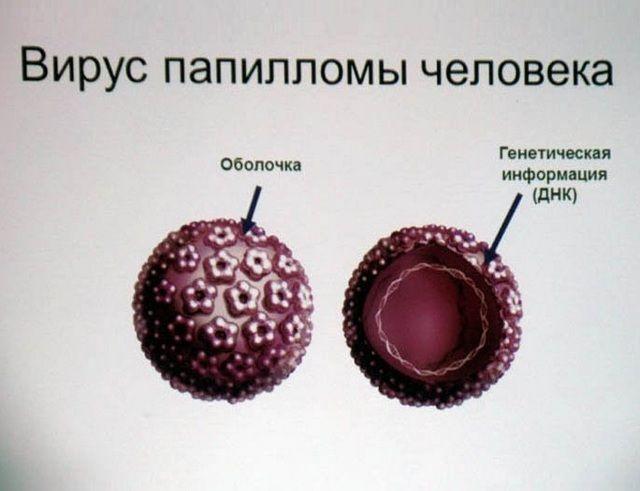 Графическое изображение вируса папилломы человека